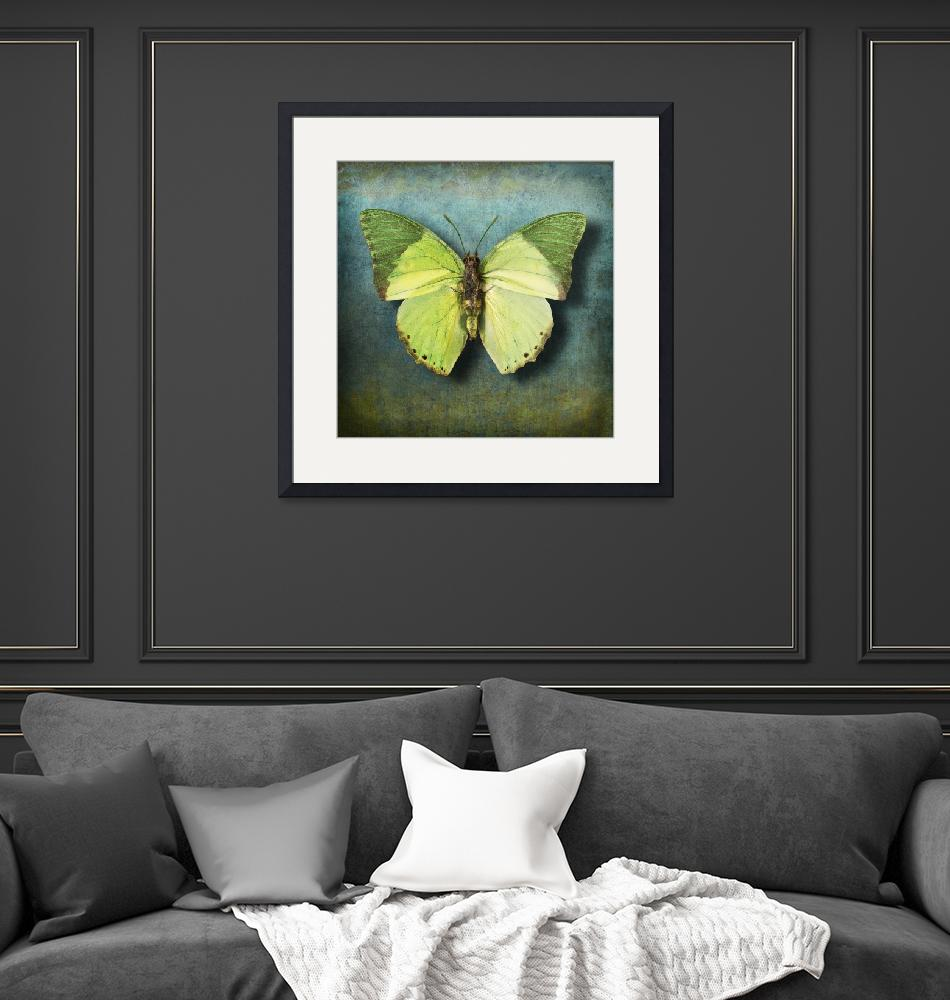 """Charaxes eupale Butterfly or African Mint Green""  (2014) by vincent-field_photography"