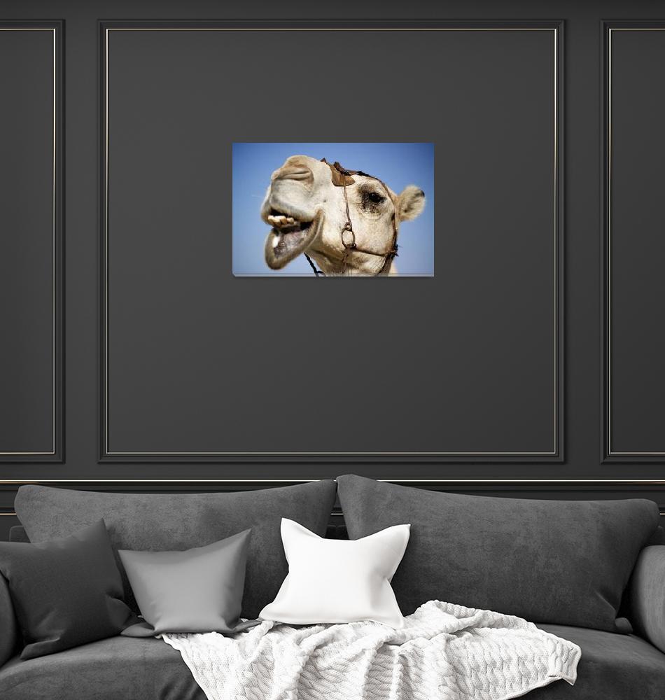 """Camel""  by SimonFenton"