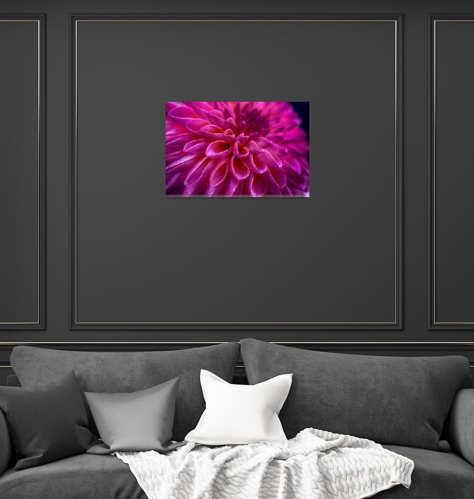 """""Perfect Pink"" Dahlia Flower""  (2013) by SoulfulPhotos"