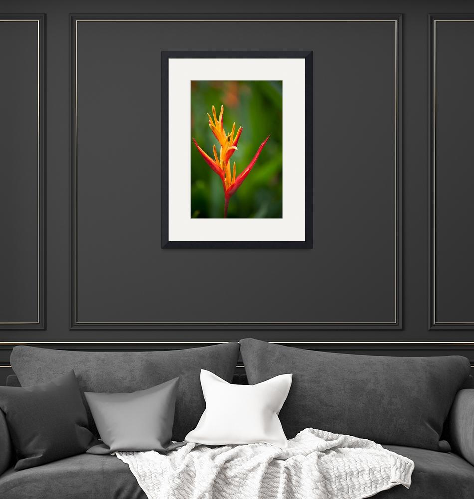 """""""Heliconiaceae Flower""""  (2018) by Mun_Sing"""