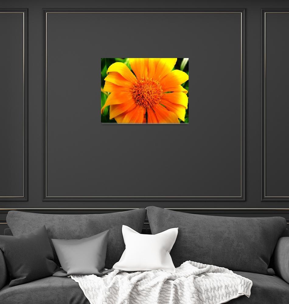 """Wild Flower, Australia""  by snaptherapy"