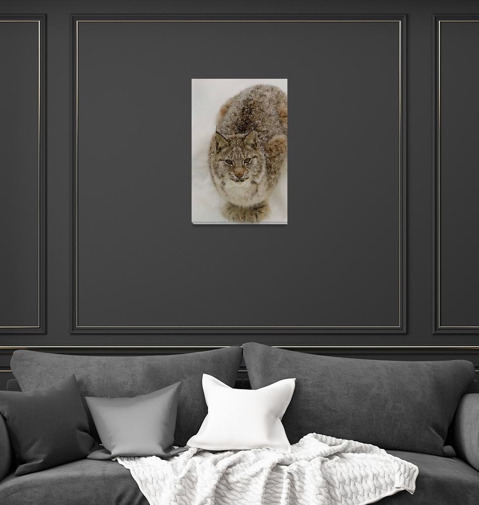 """""""Eurasian Lynx""""  (2013) by Gjesdal"""