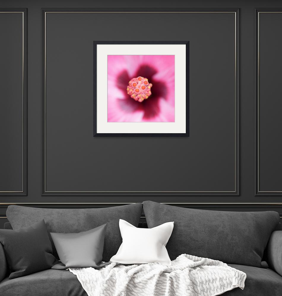 """""""Hibiscus Macro""""  (2010) by ImageArt-Photography"""