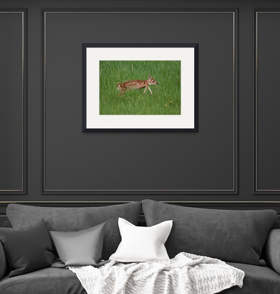 """""""Whitetail Fawn""""  by cameragal"""