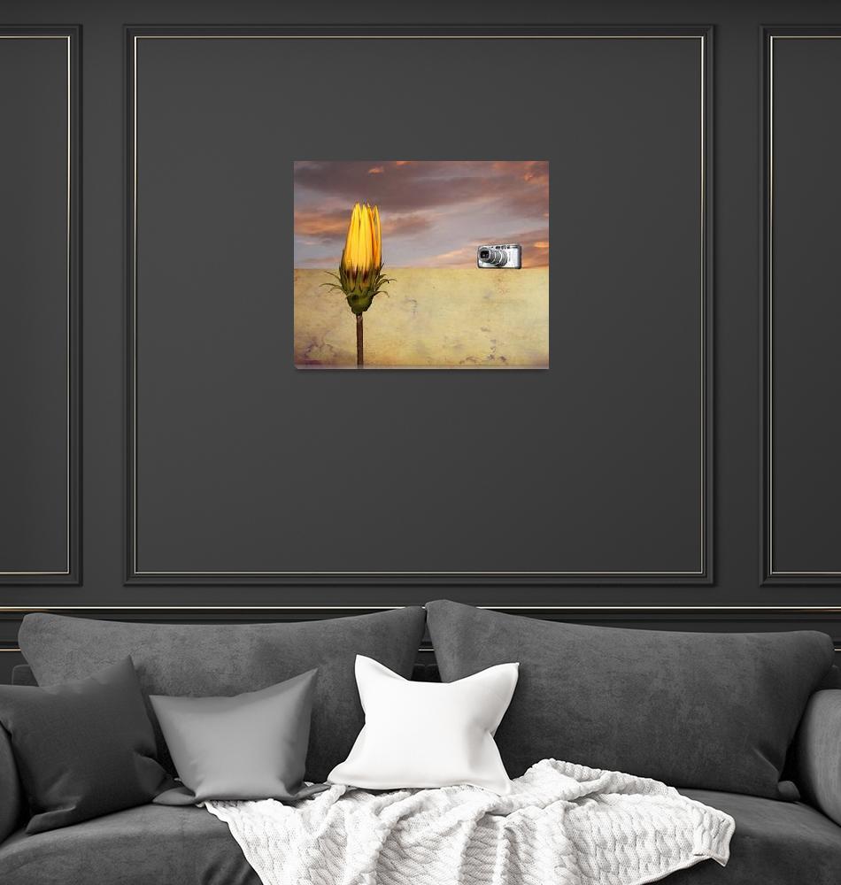 """""""FlowerInDesertCameraIV""""  by PierreDumas"""