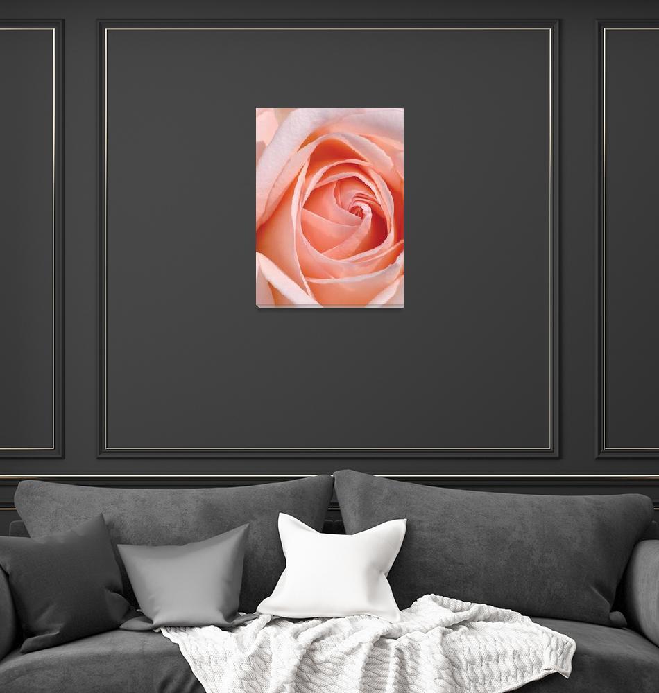 """Flower 001a Pink Spring Rose""  (2010) by Ricardos"