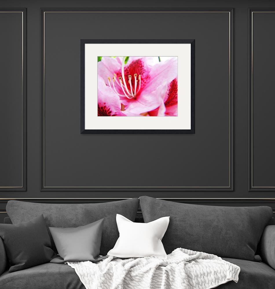 """""""PINK RHODODENDRUMS Flowers Art Prints Flower""""  (2009) by BasleeTroutman"""