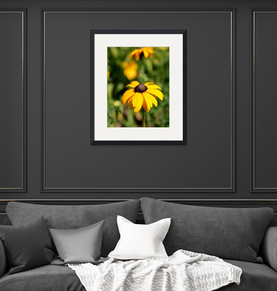 """Black Eyed Susan""  (2014) by ArtbyCarol"