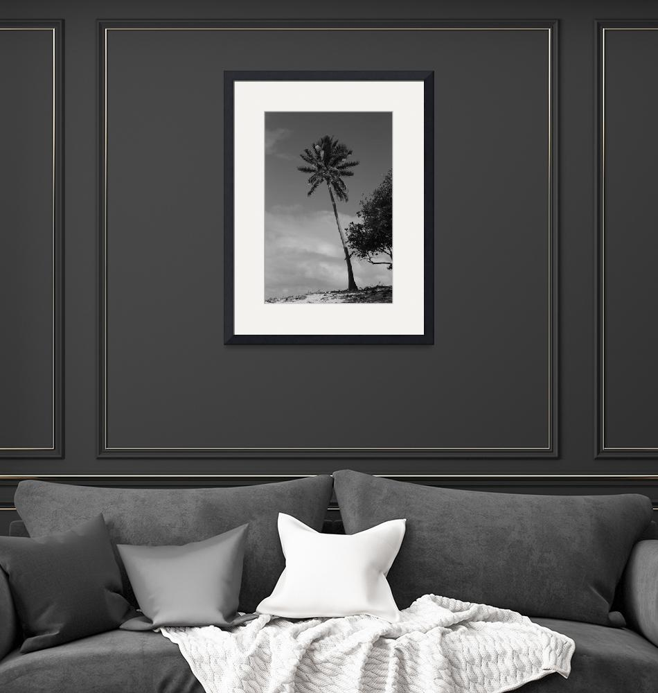 """""""Black and White Palm tree""""  (2014) by mpaskvan"""