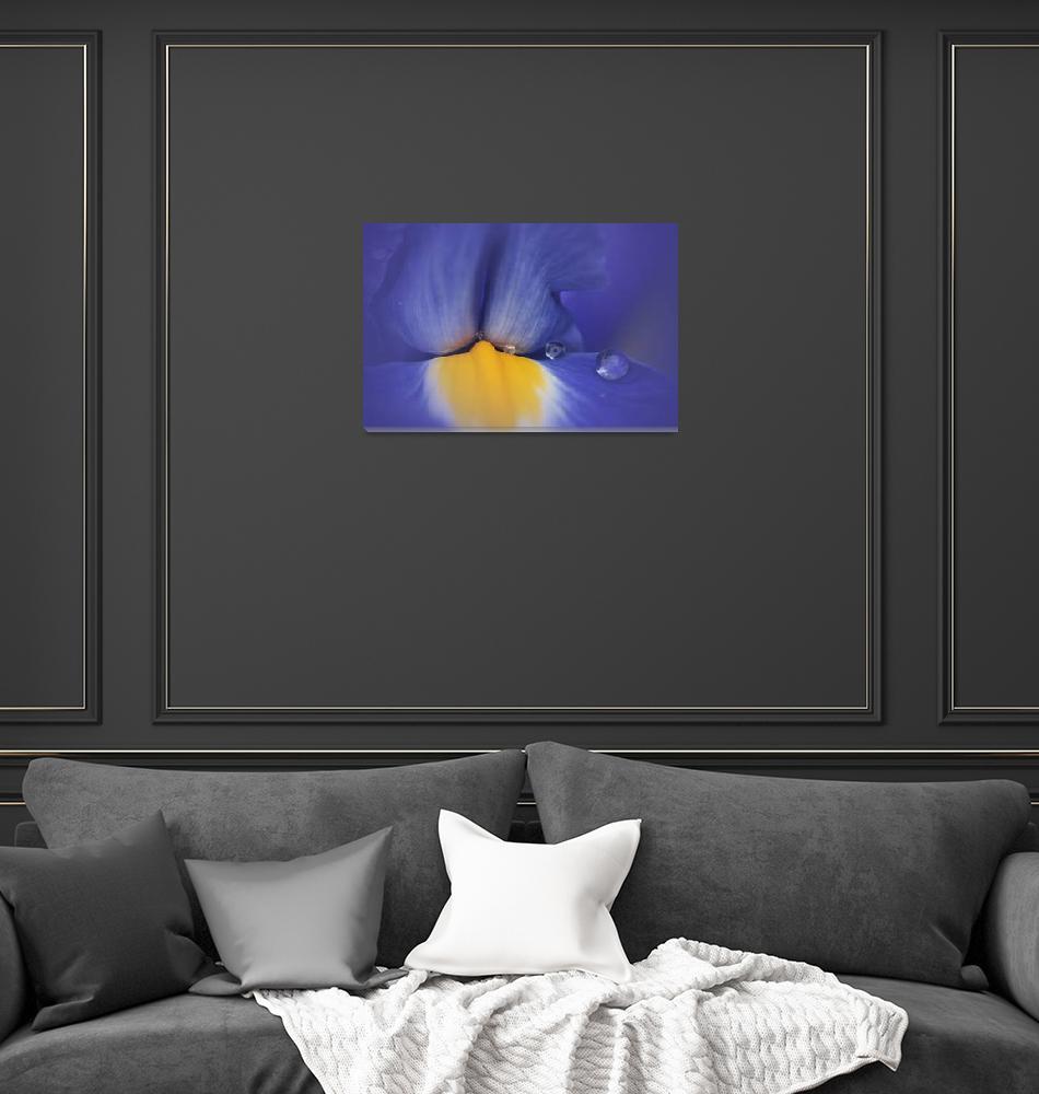 """SOFT PURPLE IRIS""  (2013) by edesigns15"