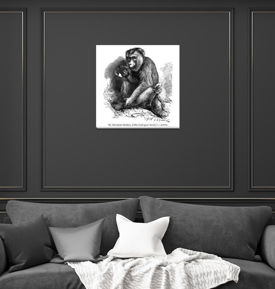 """The Andaman Monkey""  (2012) by jaredjared"
