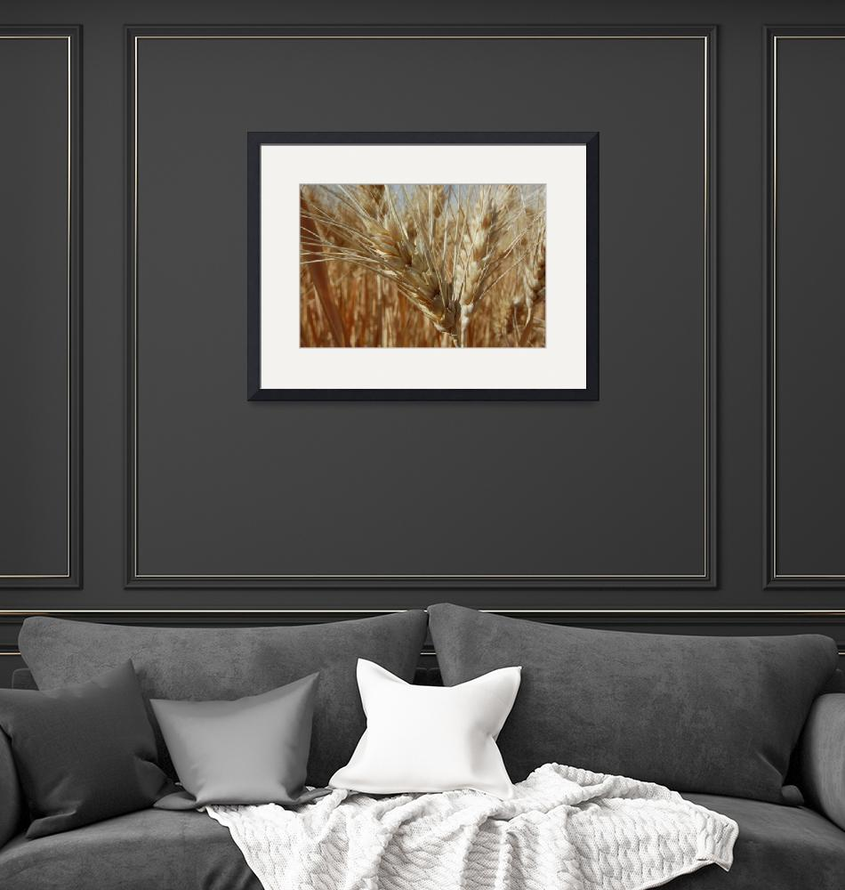 """""""Wheat 346""""  by rdales"""