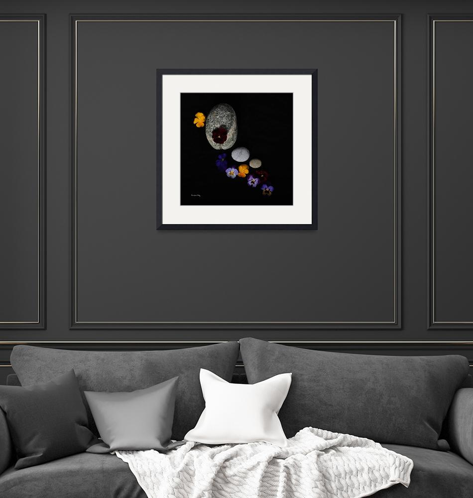 """""""A Day for Pansies""""  (2016) by GracefulFoto"""