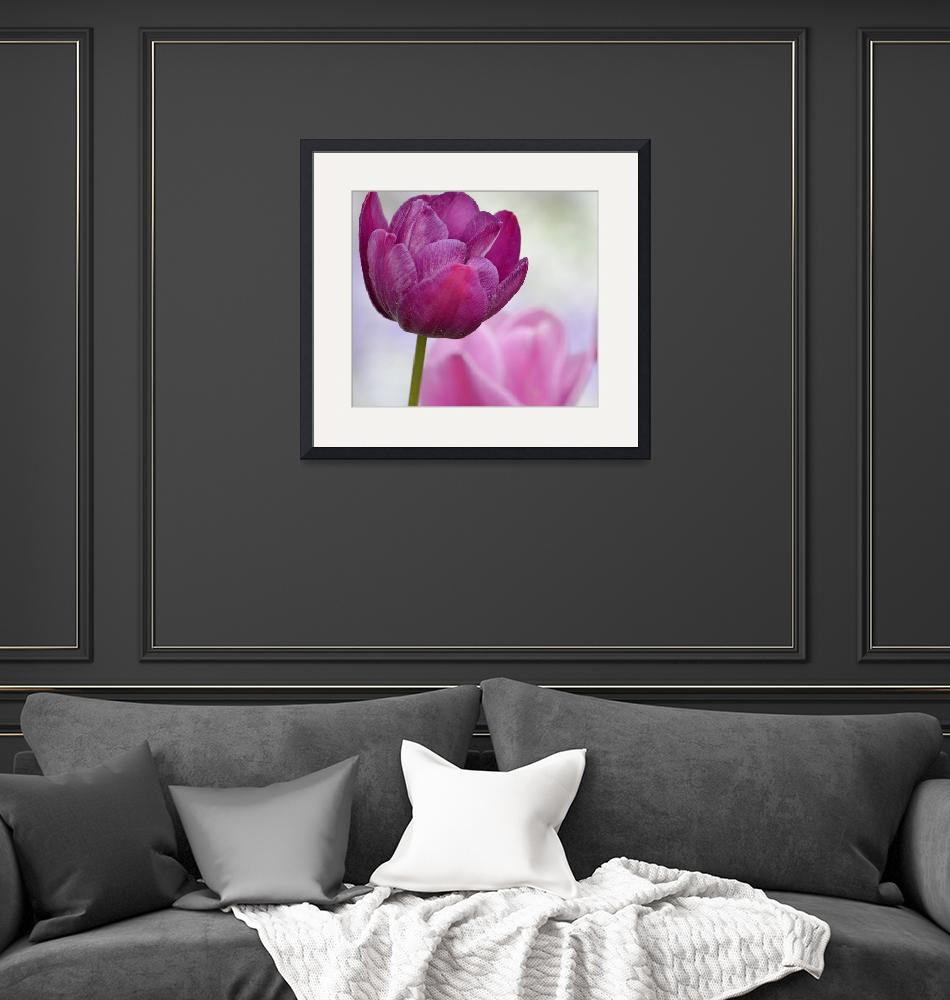 """Puple and Pink Tulips""  (2014) by joanhan"