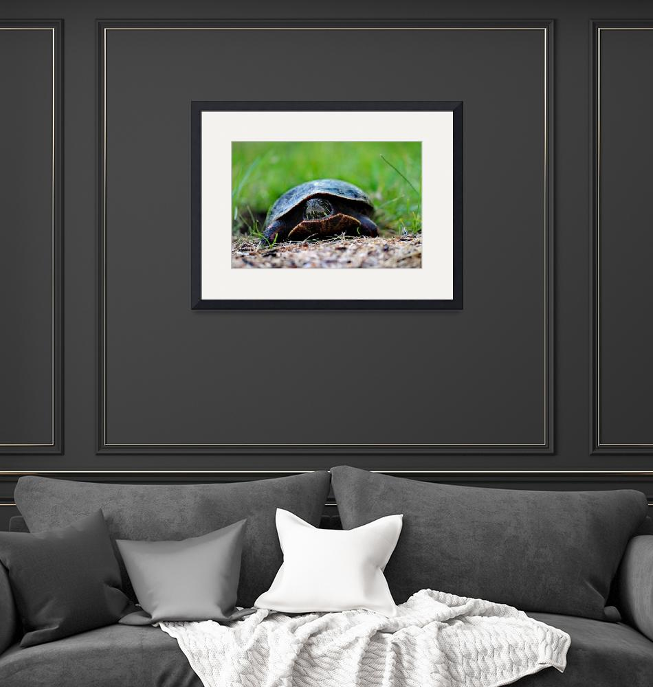 """""""Painted Turtle Lady 2016""""  (2016) by KsWorldArt"""