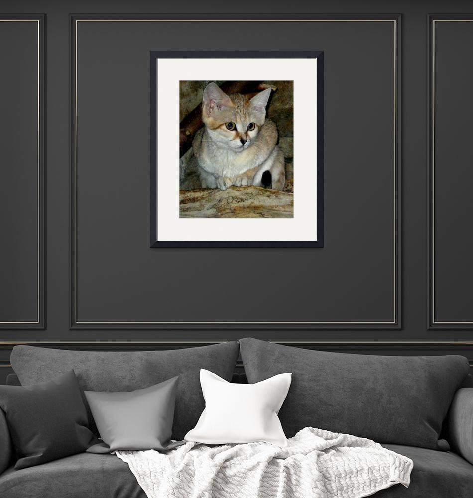"""""""Baby Sand Cat - 2""""  (2008) by patriciaschnepf"""