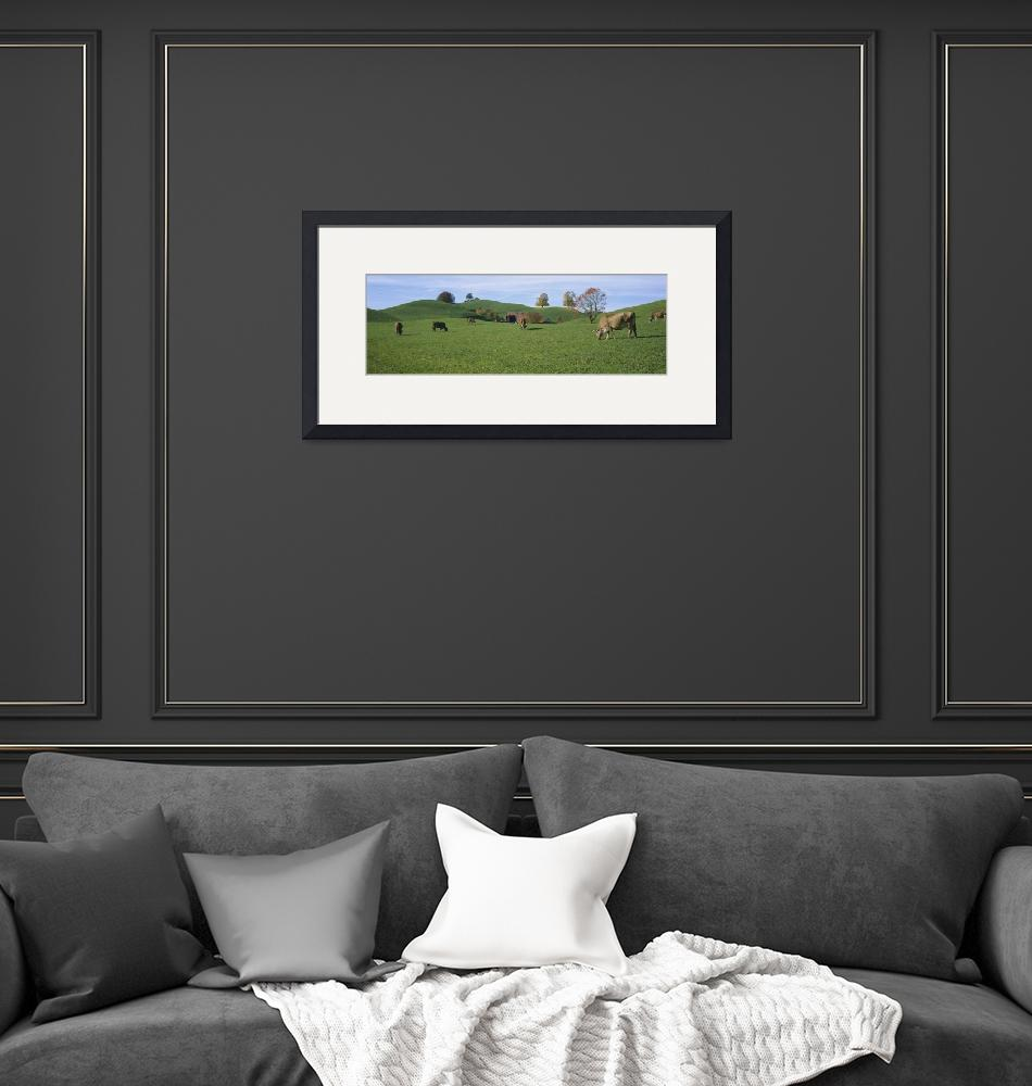 """Cows grazing on a field""  by Panoramic_Images"