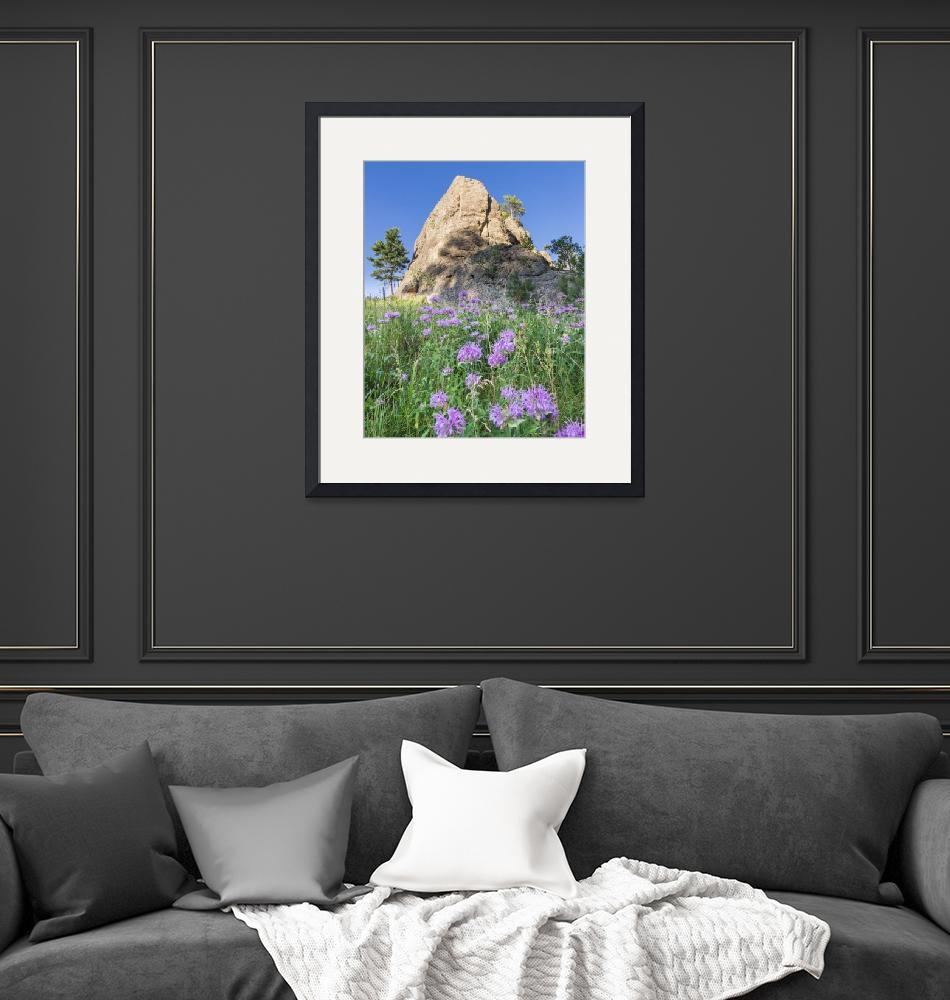 """""""Purple Flowers in the Black Hills""""  (2020) by DanBourque"""