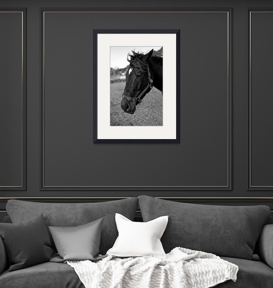 """""""The Black Horse""""  (2010) by PetrStary"""