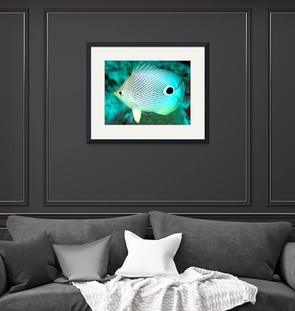 """""""Two Eyes Butterflyfish""""  (2012) by JoaoPonces"""