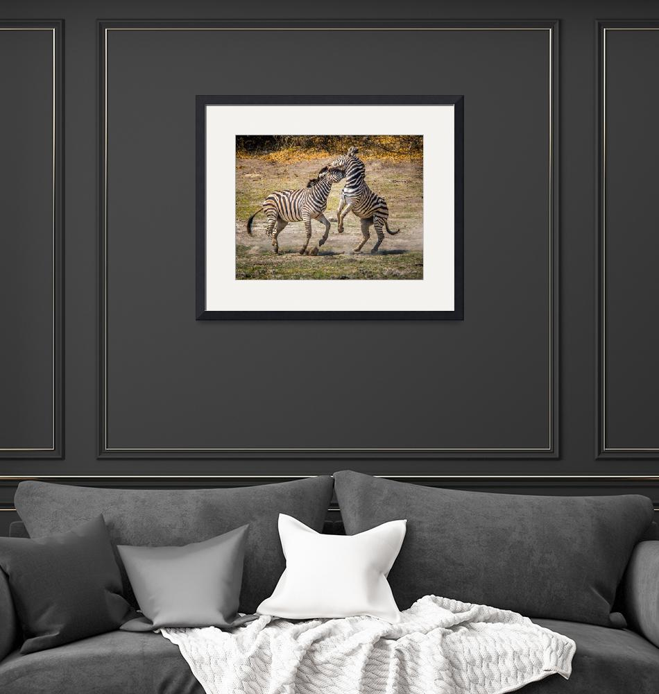 """""""African Zebras #2""""  (2016) by mjphoto-graphics"""