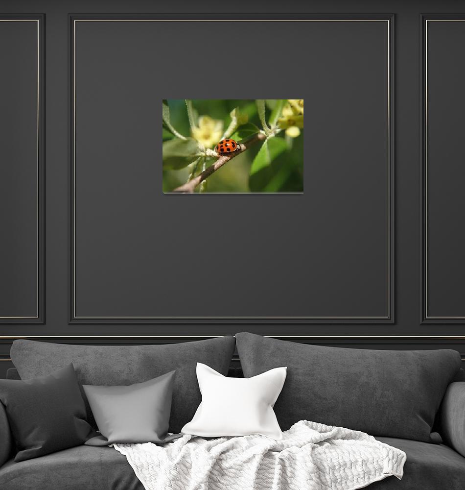"""""""Exploring ladybug""""  (2012) by madworld"""