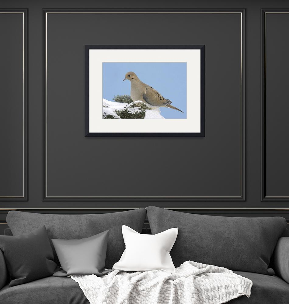 """""""Mourning Dove Photograph""""  by ArtLoversOnline"""