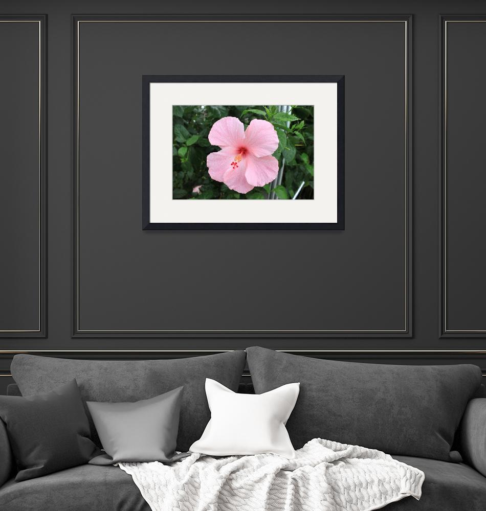 """Pink Orchid""  (2012) by DavesDigitalPhotography"