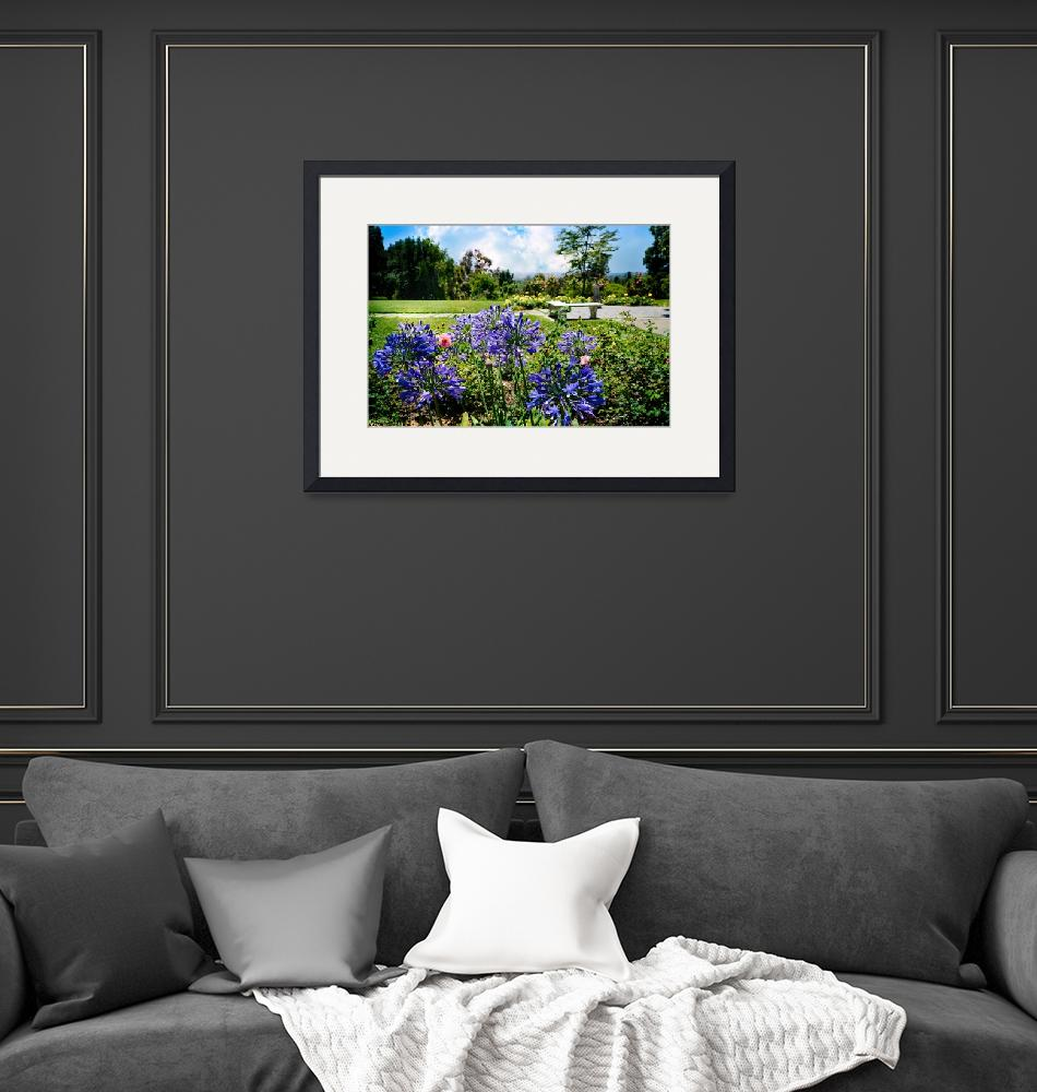 """""""Agapanthus in the Rose Garden""""  (2017) by LynnBauer"""