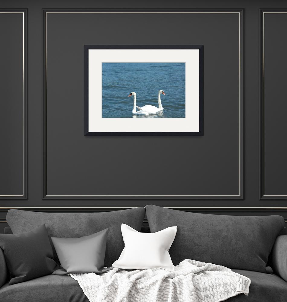 """""""2 swans in the water""""  (2008) by oleposya"""