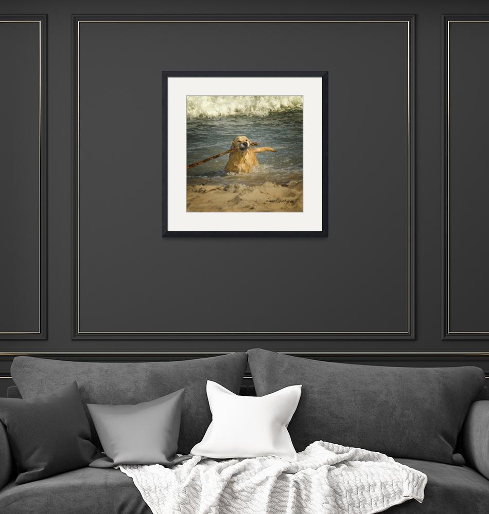 """""""GOLDEN RETRIEVING""""  (2013) by shaynaphotography"""