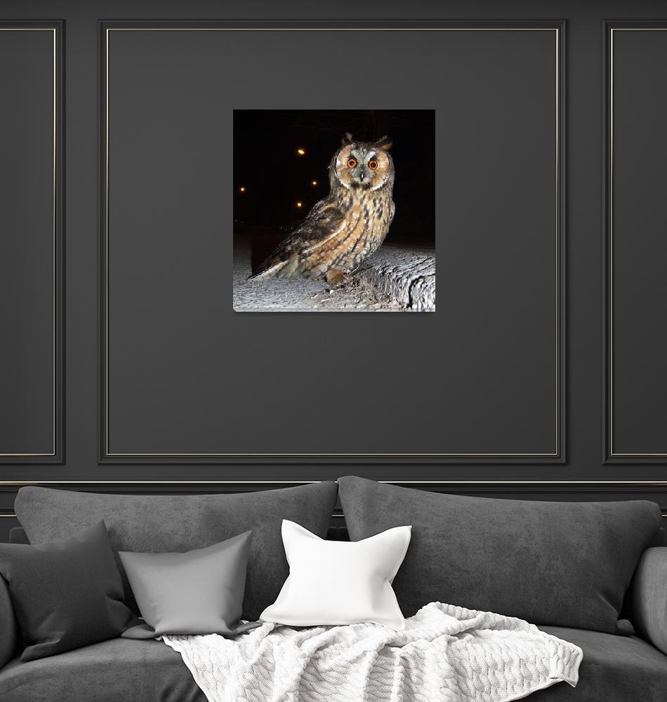 """Long eared owl (Asio otus) DSCF1770""  (2013) by Banstolac"