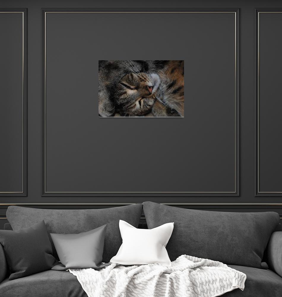 """Cute Cat""  (2010) by carolpayne"