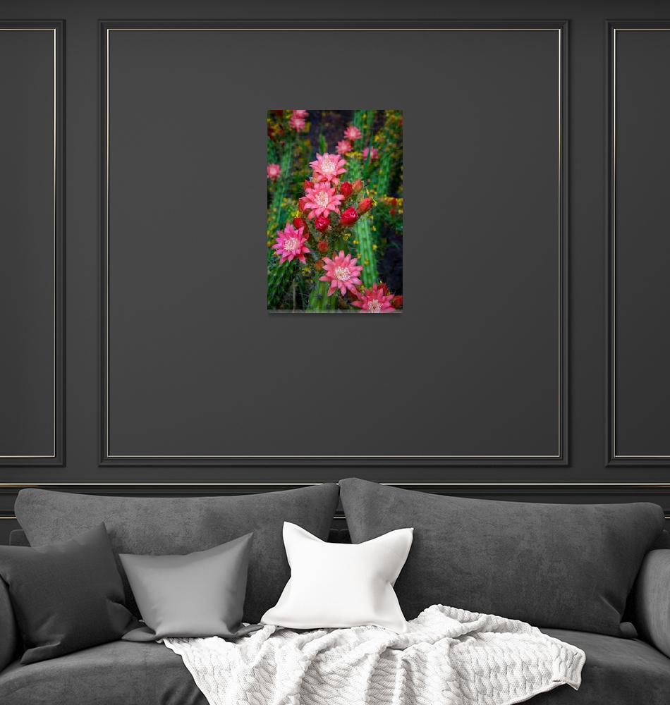 """Confetti Cactus Flowers""  (2017) by LynnBauer"