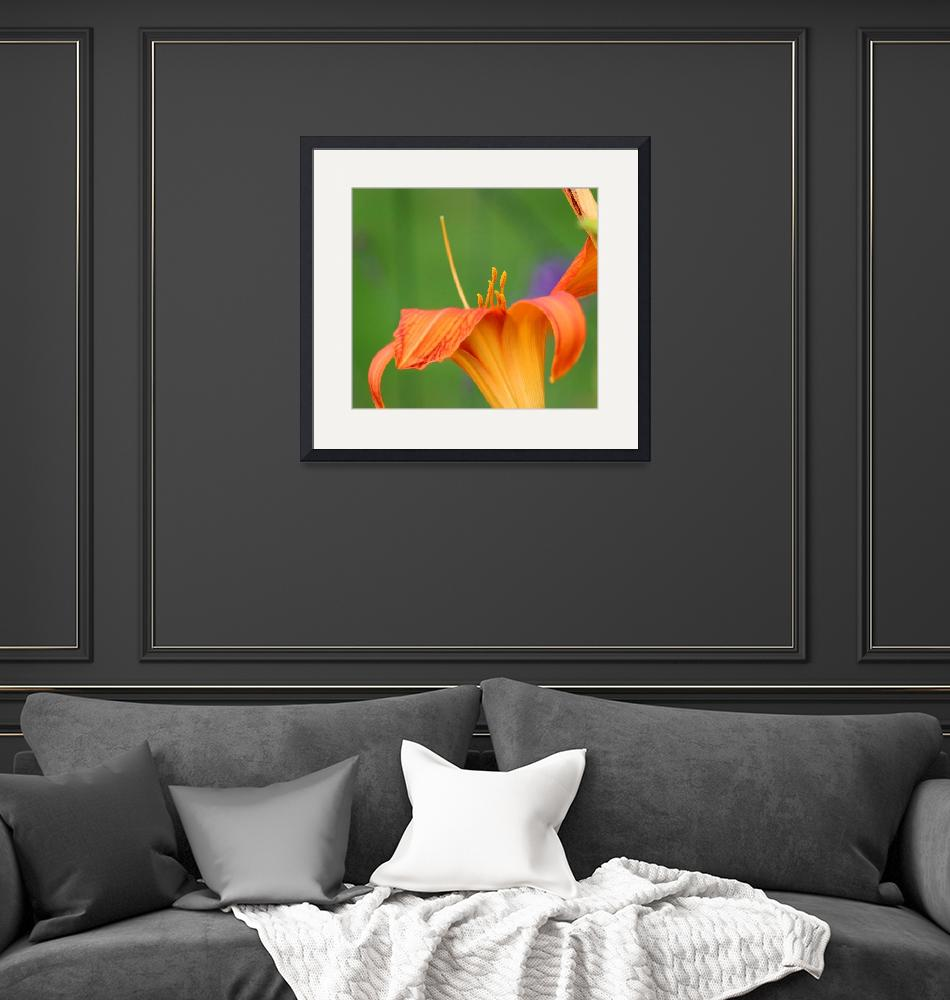 """Orange Daylily Macro""  (2016) by KsWorldArt"
