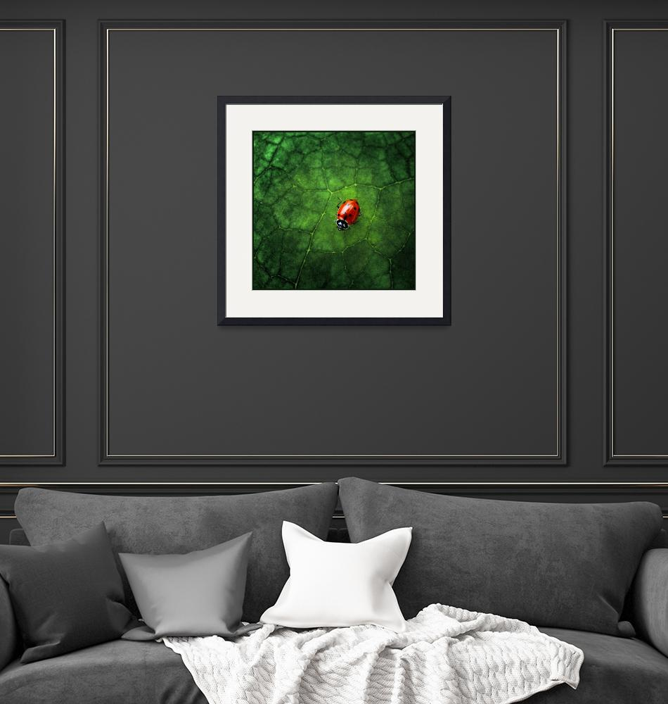 """Ladybug at Home""  (2007) by jody9"
