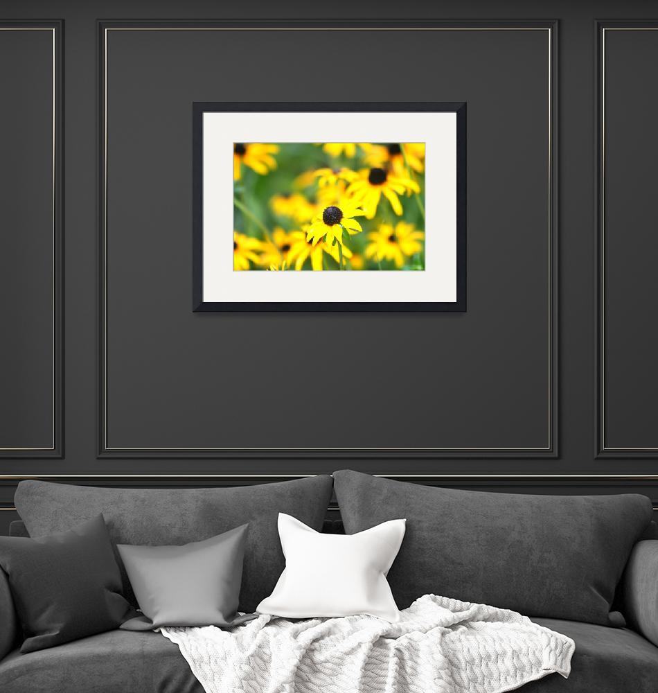 """Profusion of Black Eyed Susans""  (2008) by nadinerippelmeyer"