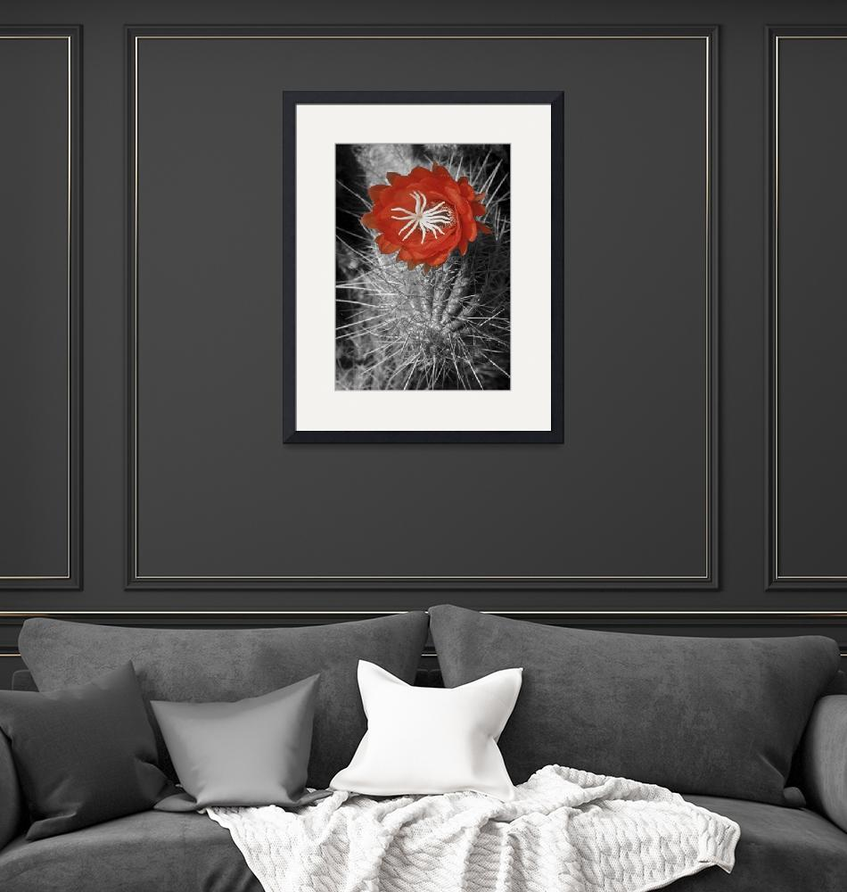 """""""Red Cactus flower blossom""""  by eyalna"""