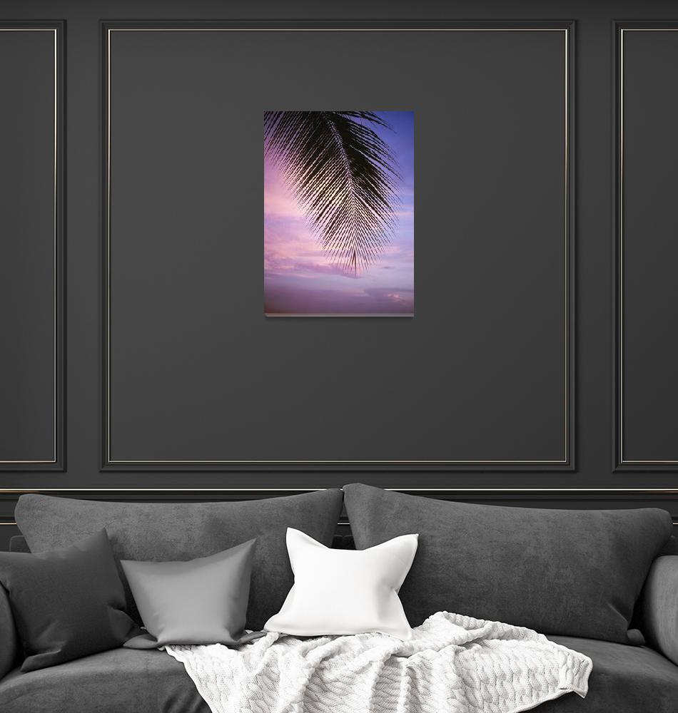 """""""Palm Tree Branch At Sunset, Close Up, Barbados""""  by DesignPics"""