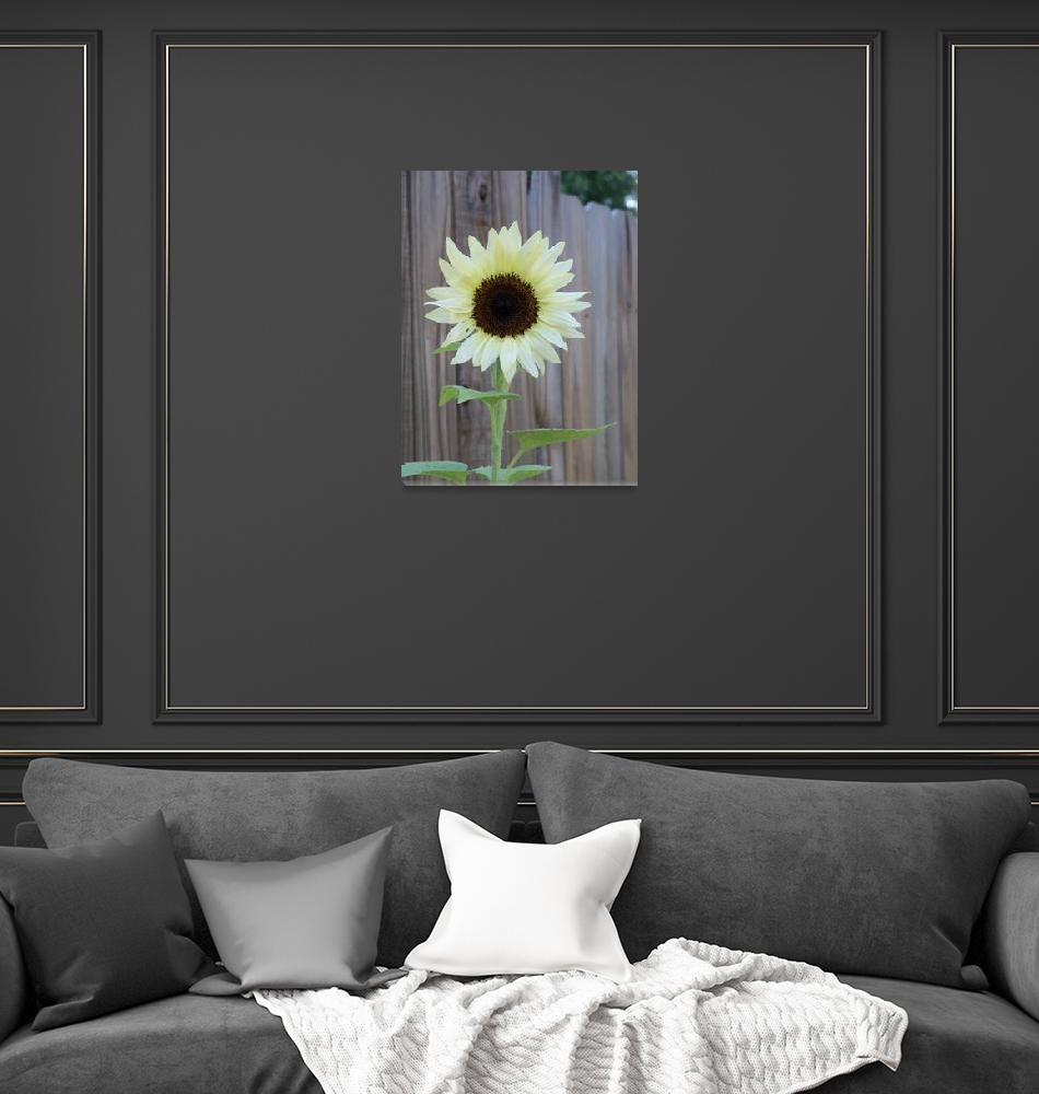 """""""white sunflower 1""""  (2017) by NormaStampSunnyDaze"""