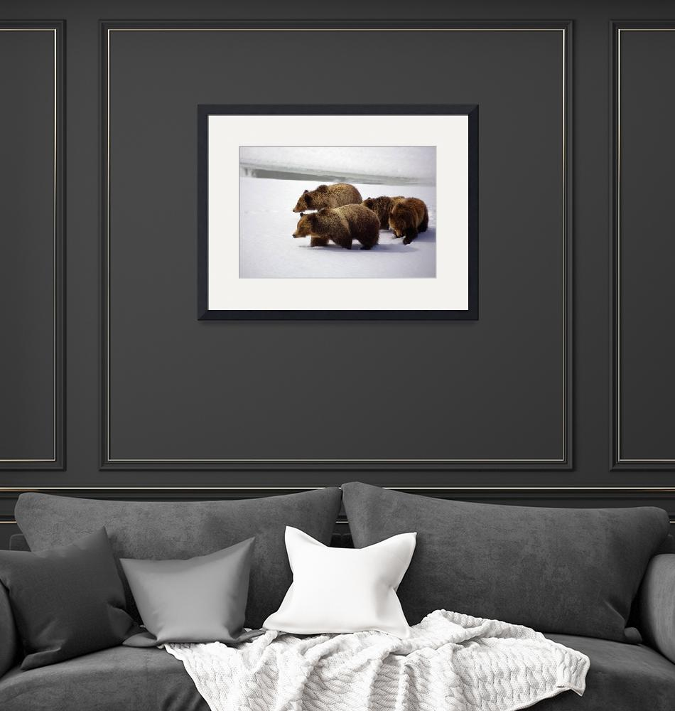 """""""Grizzly Bear 399 and Her Cubs""""  (2008) by cavaroc"""