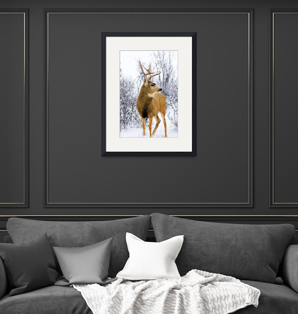 """""""_MG_7438-Snowstorm Stag""""  (2014) by swkrullimaging"""