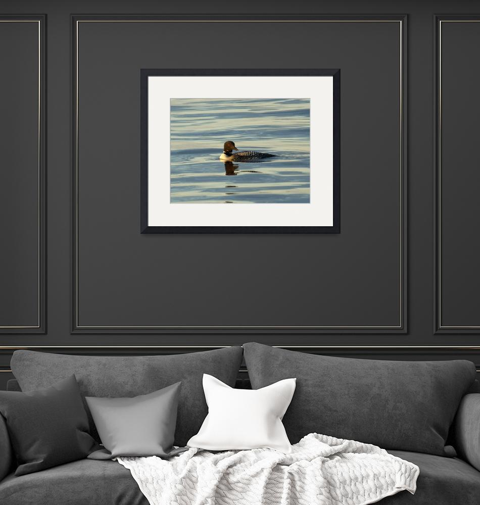 """""""Common Loon""""  (2010) by DryFlyPhotograhy"""