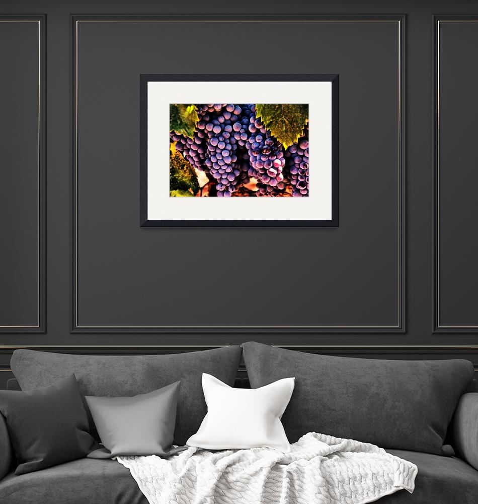 """""""Wine Grapes""""  (2009) by BarbaraBrownPhotography"""