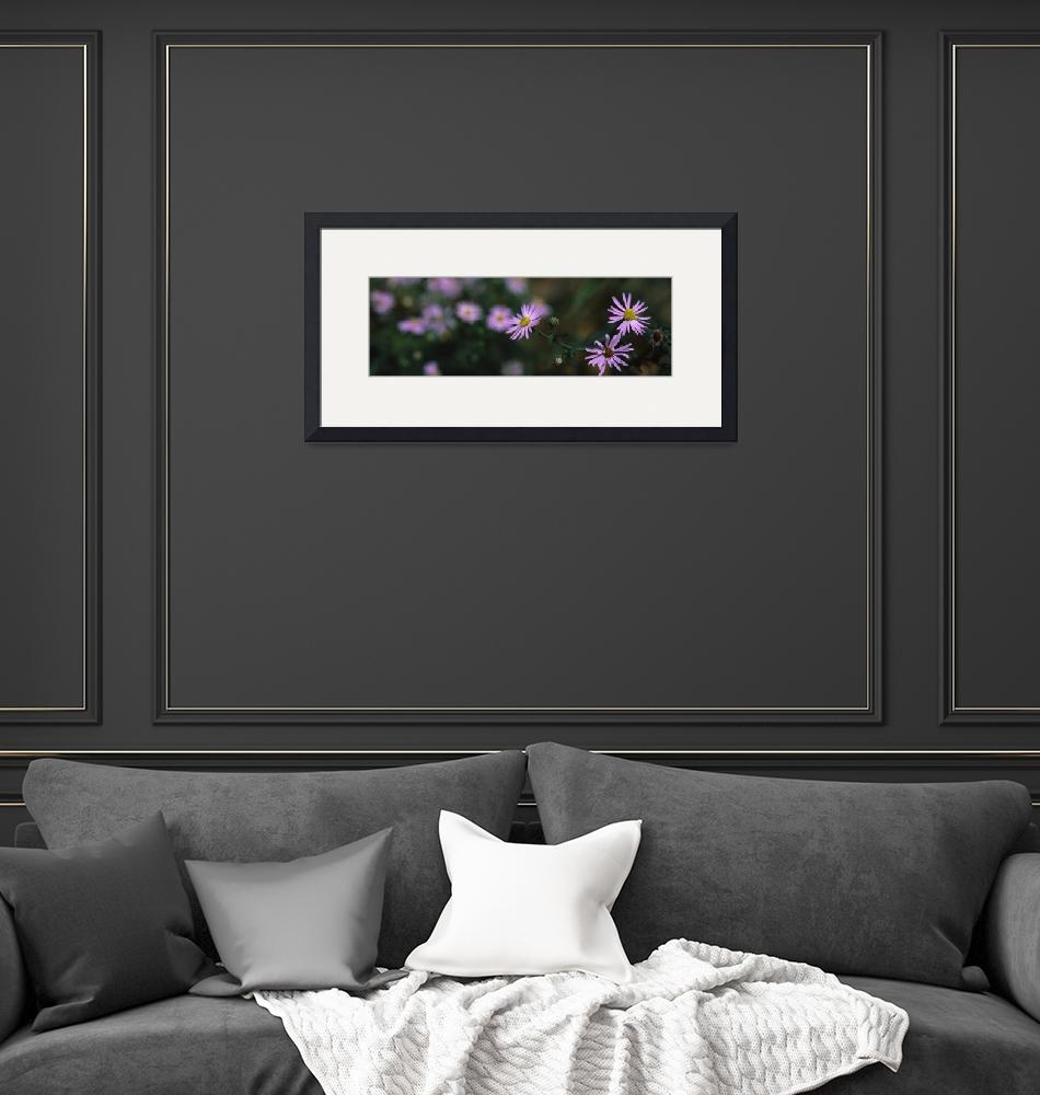 """""""Close up of small purple flowers""""  by Panoramic_Images"""
