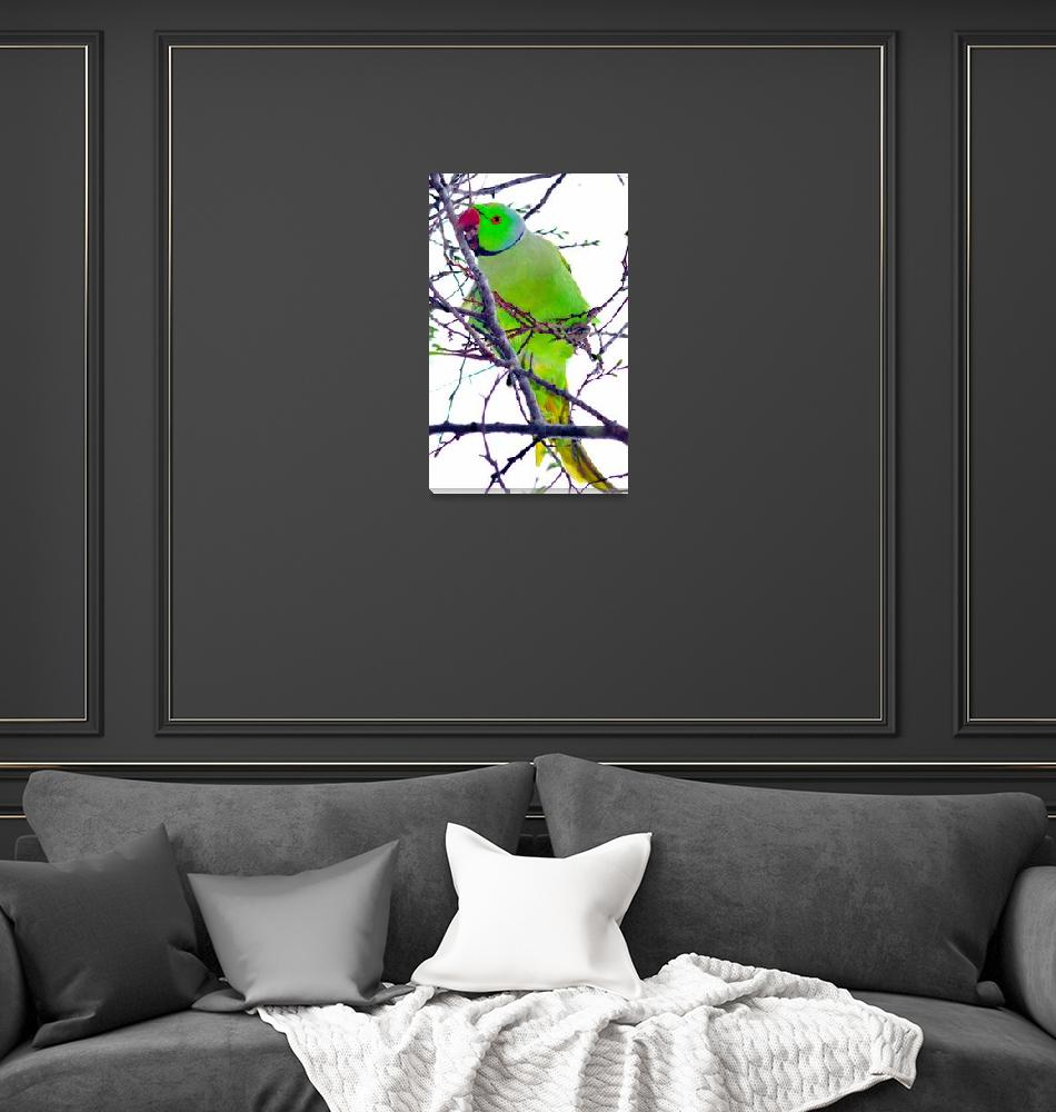 """""""Parrot Eating""""  (2012) by JoaoPonces"""