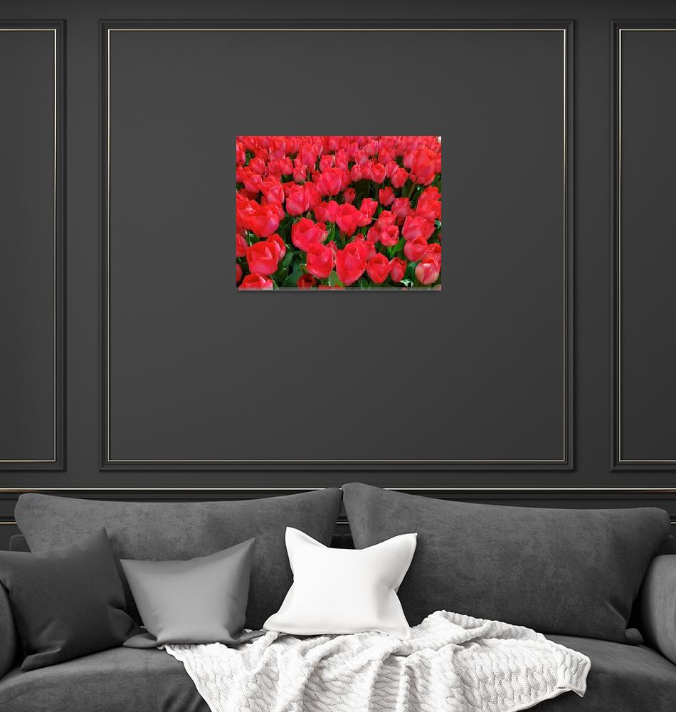 """""""Red Tulips""""  (2018) by ShemsEddine"""
