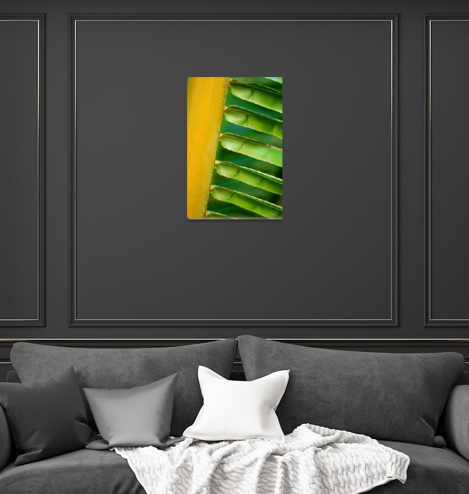 """Palm""  (2008) by dgaedeke"