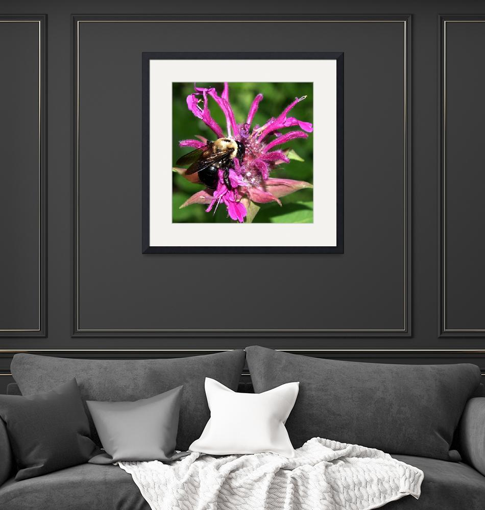"""""""Bee On Beebalm Photography by Ginette Callaway""""  (2008) by GinetteCallaway"""