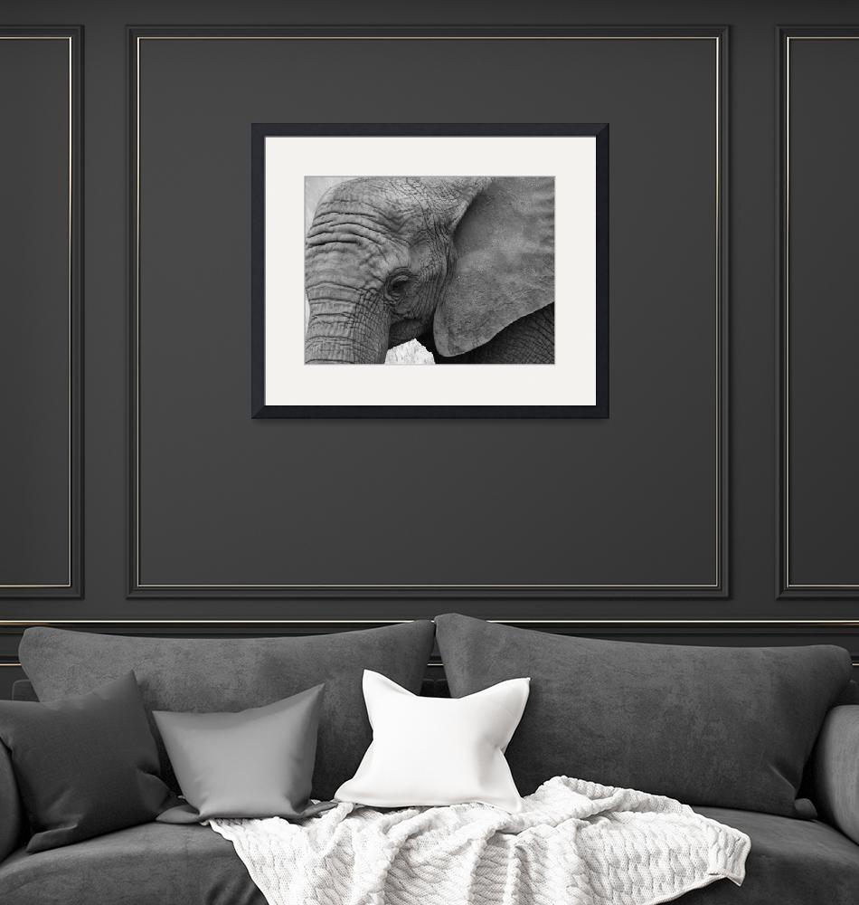 """Elephant gray""  (2014) by gallerymay"